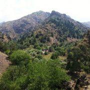 juniper trees in Aksak ata valley